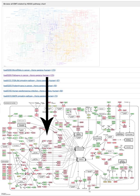Kegg Pathway Analysis Tutorial